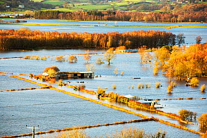 Flooded farms in the Lyth Valley, during Storm Desmond. Cumbria, England, UK, 10th December 2015. - Ashley Cooper