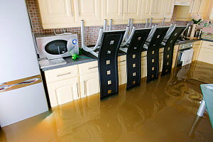 Interior view of house during flooding, Toll Bar near Doncaster, South Yorkshire, England, UK, July 2007.  -  Ashley Cooper