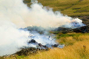 Burning brush wood from a forestry plantation near Egremont, Cumbria, England, UK, August. - Ashley Cooper