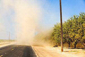 Almond (Prunus amygdalus) groves with dust storm during the 2011-17 California drought. Almonds take large amounts of water to grow and rely on irrigation to grow. Wasco, Central Valley, California, U...  -  Ashley Cooper