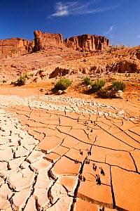 Dried up river bed in the Anti Atlas mountains of Morocco, North Africa. April 2012. In recent years, rainfall totals have reduced by around 75% as a result of climate change.  -  Ashley Cooper
