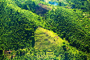 Aerial view of mountains deforested for fuel and agricultural land, Malawi. March 2015. - Ashley Cooper