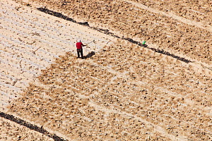 Aerial view of farmers working in fields during severe drought, Shanxi province, China. March 2009. - Ashley Cooper