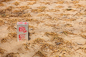 Withered crops dried up during drought, Beijing, China. March 2009. - Ashley Cooper