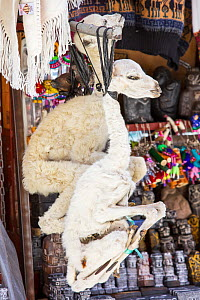 Llama (Lama glama) foetus for sale in the Witches Market in La Paz, Bolivia, South America. - Ashley Cooper