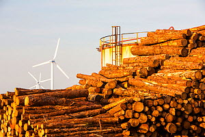 Logs bound for a biofuel power station in Workington next to oil tanks in Workington port, Cumbria, UK, with a wind farm in the background.  -  Ashley Cooper