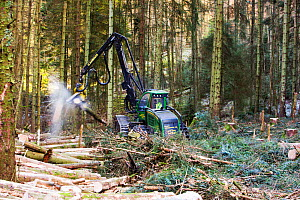 A forwarder, a specialist machine for cutting timber for biofuel  in Grizedale Forest, Lake District, England, UK - Ashley Cooper