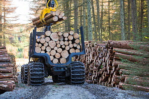 Truck hauling freshly cut timber for biofuel in Grizedale forest, Lake District, England, UK, May 2013. - Ashley Cooper
