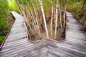 Mangrove swamp at high tide in Cairns with board walk, Queensland, Australia, February 2010. - Ashley Cooper