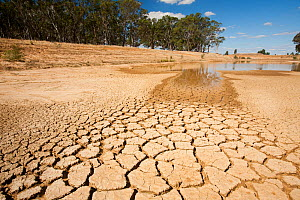 Farmer's watering hole on a farm almost dried up during drought which lasted from 1996-2011. Shepperton, Victoria, Australia.  February 2010.  -  Ashley Cooper