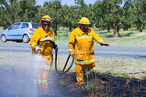 CFA fire fighters tackling a roadside fire near Shepperton, Victoria, Australia, probably started by a motorist throwing a cigarette out of the window. This image was taken during the drought which 15...  -  Ashley Cooper