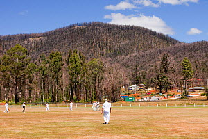 Memorial cricket match between Kinglake and Marysville on anniversary of  catastrophic bush fire in which 173 people were killed. Victoria, Australia, February 2010. - Ashley Cooper