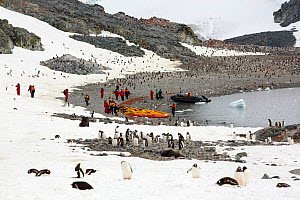 Gentoo penguins (Pygoscelis papua) with members of an expedition cruise ship. Curverville Island, Antarctic Peninsula.  -  Ashley Cooper