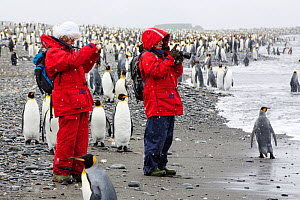 King penguins (Aptenodytes patagonicus), with passengers from an expedition cruise. Salisbury Plain, South Georgia Islands. - Ashley Cooper