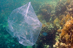 Plastic bag which looks like a jellyfish in sea, Mangrove Bay, El Quseir, Egypt. - Roland  Seitre