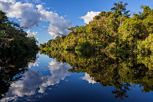 River in Amazon rainforest with reflections in water, Cuyabeno National Park, Sucumbios, Ecuador, May 2015.  -  Lucas Bustamante