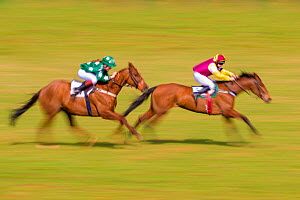 Blurred motion image of two horses with jockeys galloping during Itton point-to-point horse race, Monmouthshire, Wales, UK.  -  Phil Savoie