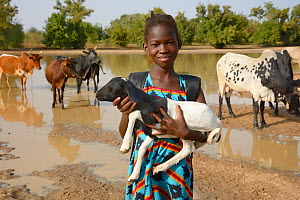 Young girl holding baby goat, with cattle behind, Burkina Faso. December 2017.  -  Loic Poidevin