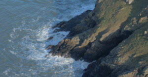 Aerial shot tracking over sea cliffs, Pembrokeshire, Wales, UK, January 2017.  -  Five Films