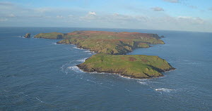 Aerial view of Skomer Island off the coast of Pembrokeshire, Wales, UK, January 2017.  -  Five Films