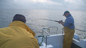 Fisherman reeling in a Pollack (Pollachius pollachius) with another fisherman nearby, sustainably caught using pole and line, English Channel, near Salcombe, Devon, UK, November 2016.  -  Five Films