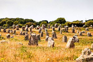 People walking among Carnac megaliths, Lorient, Brittany, France, June 2015.  -  Merryn Thomas