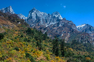 Mountains with forest, Sikkim, India. October 2008.  -  Felis Images