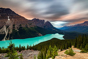 View looking out over Lake Peyto at sunset, Banff National Park, Alberta, Canada. July 2017.  -  Felis Images