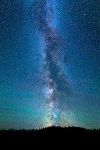 The Milky way over silhouetted forest, Alberta Canada, July 2016.  -  Felis Images