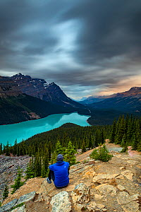 Man looking out over Lake Peyto, Banff National Park, Alberta, Canada. - Felis Images