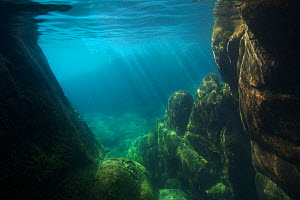Underwater view of Lake Malawi, Malawi, Photographed for The Freshwater Project. - Michel  Roggo