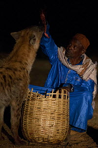 Man feeding Spotted hyenas (Crocuta crocuta) at night, Harar, Ethiopia, December 2017. - Luke Massey