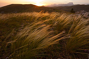 Sunset light on fairy grass (Stipa sp.) with Gran Sasso mountains in background. Gran Sasso National Park, Abruzzo, Italy, June 2012.  -  Bruno D'Amicis