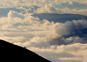 Red deer (Cervus elaphus) stag walking on mountain slope with clouds and distant ridges in the background. Central Apennines, Abruzzo, Italy, October.  -  Bruno D'Amicis