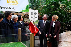 Naming ceremony of the 4-month panda cub at Beauval Zoo / ZooParc de Beauval on St-Aignan, France, December 4, 2017. From left to right: Rodolphe Delord, CEO of Beauval Zoo, former French prime minist... - Eric Baccega