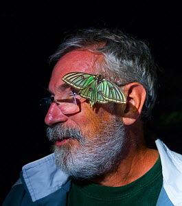 Man with female Spanish moon moth (Graellsia isabellae) on face during scientific research, The Ports Natural Park, Catalonia, Spain, June.  -  Juan  Carlos Munoz
