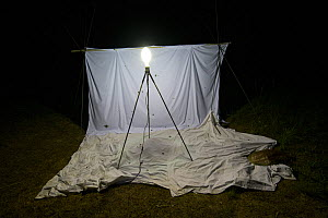 White sheet and lights to attract moths for scientific study on Spanish moon moth (Graellsia isabellae), The Ports Natural Park, Spain, June. - Juan  Carlos Munoz