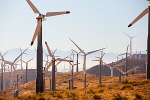 Part of the Tehachapi Pass wind farm, the first large scale wind farm area developed in the US, California, USA. September 2014 - Ashley Cooper