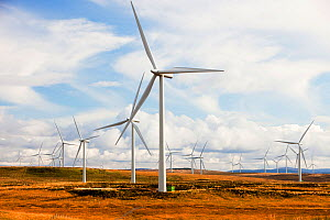 Whitlee wind farm on Eaglesham Moor just south of Glasgow in Scotland, UK, is Europes largest onshore wind farm with 140 turbines and an installed capacity of 322 MW, enough energy to power 180,000 ho... - Ashley Cooper