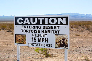 A sign about the  Mojave desert tortoise (Gopherus agassizii) near Lake mead in Nevada, USA. September 2014  -  Ashley Cooper