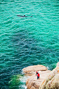 Young Basking shark (Cetorhinus maximus) swimming close to shore  near a couple fishing off the rocks at Porthcurno, Cornwall, UK. June 2010  -  Ashley Cooper