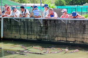 Tourists watching Saltwater crocodile (Crocodylus porosus), at Hartleys Crocodile Farm north of Cairns in Queensland, Australia. The animals are raised mainly for their skins, with meat being a by pro...  -  Ashley Cooper