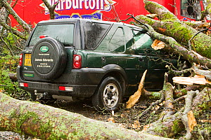 Car hit by tree which has fallen after a severe storm hit Cumbria with over 100 mph winds, Cumbria, England, UK. January 2005 - Ashley Cooper