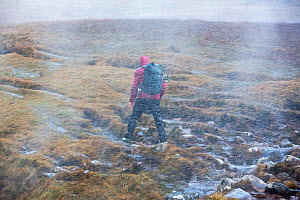 Moorland stream waterfalls blowing uphill in storm force winds, with a walker struggling past, Stoer in Assynt, Scotland, UK,  October 2013  -  Ashley Cooper