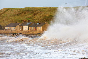 Waves crashing off Parton near Whitehaven during the January 2014 period of storm surge, high tides and storm force winds. The coastline took a battering, damaging the harbour wall and eroding a large... - Ashley Cooper