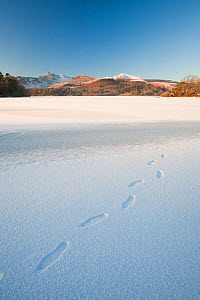 Derwent Water at Keswick in the Lake District completely frozen over during the December 2010 big chill, with footsteps from a walker who walked across the lake. December 2010  -  Ashley Cooper