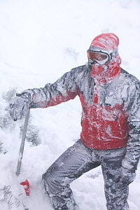 Mountaineer in blizzard, Cairngorm Scotland UK. February 2007  -  Ashley Cooper