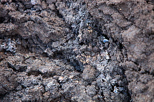 Bitumen from tar sands leaching out in a road cutting. Alberta, Canada. August 2012 - Ashley Cooper