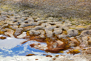 Patterned ground and stone circles formed above permafrost in the high Arctic on Spitsbergen, Svalbard. The paaterns are formed by frost heave and freeze thaw cycles which pushed the large rocks out f...  -  Ashley Cooper