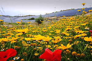 Wildflowers and a photo voltaic solar power station near Lucainena de las Torres, Andalucia, Spain. May 2011 - Ashley Cooper